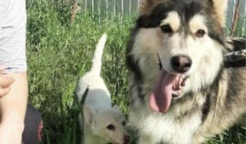 Породистую собаку  привязали к кусту с запиской и двумя щенками