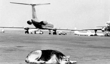 Как пес два года ждал хозяина в аэропорту, а потом улетел в Киев