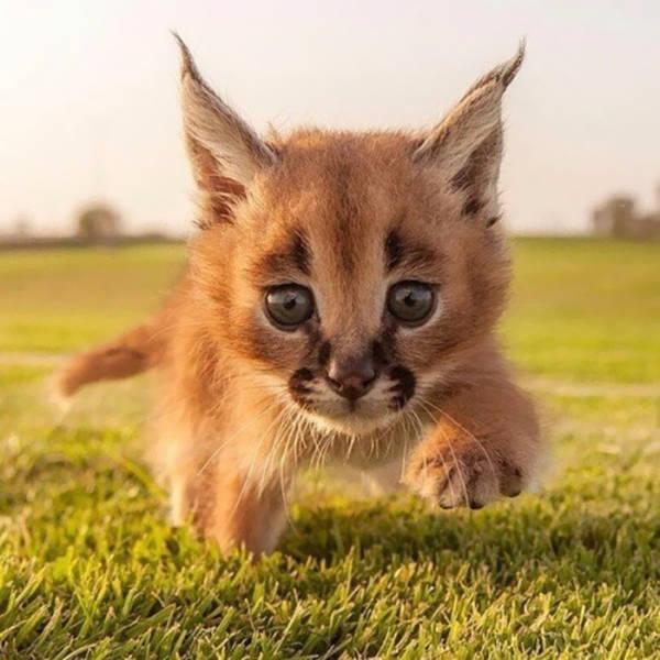 Это самые красивые котята в мире