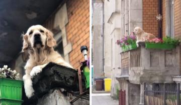 Флегматичный пес на балконе стал главной достопримечательностью Гданьска