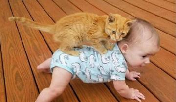 15 доказательств, что котики вновь доминируют в Интернете
