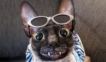 Кот с необычной улыбкой похож на большую летучую мышь
