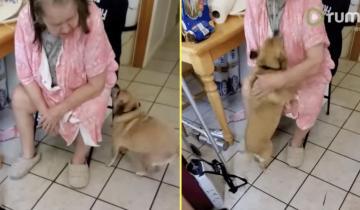 Пес встретил бабушку после больницы и его реакция растопит сердце любого