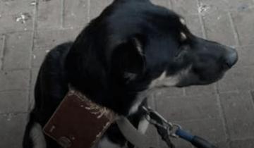 Хозяин оставил пса около супермаркета с кошельком и запиской