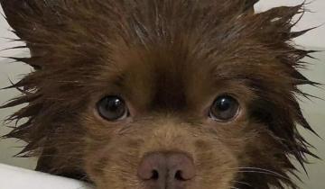 10 фото забавных и милых собак, перед которыми никто не сможет устоять